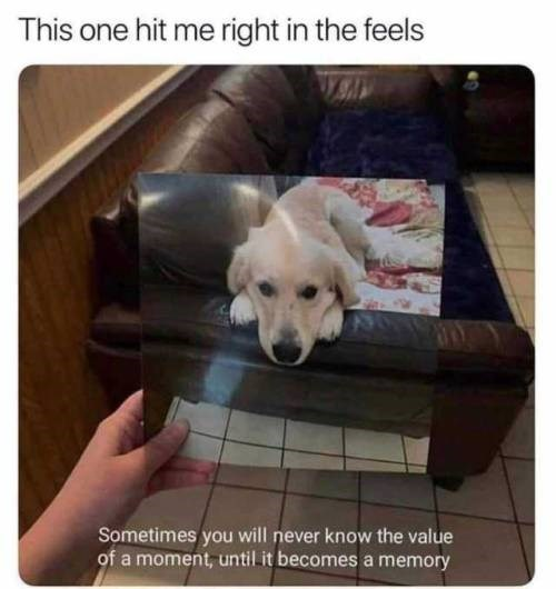 Dog - This one hit me right in the feels Sometimes you will never know the value of a moment, until it becomes a memory