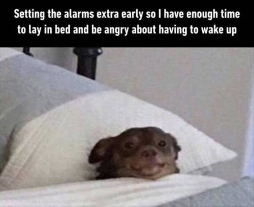 Canidae - Setting the alarms extra early so I have enough time to lay in bed and be angry about having to wake up