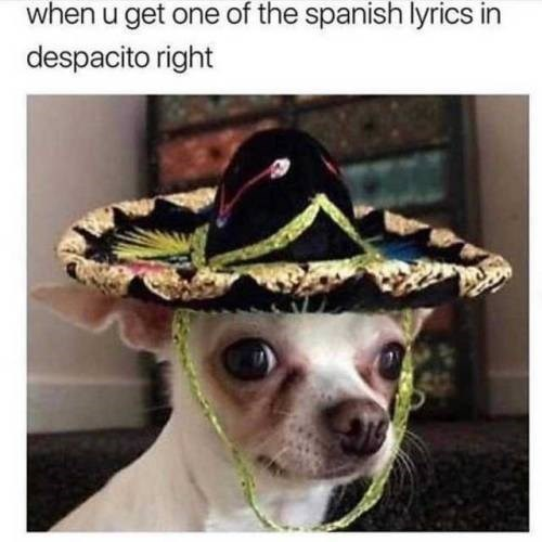 Dog - when u get one of the spanish lyrics in despacito right