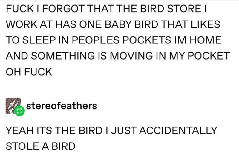 Text - FUCK I FORGOT THAT THE BIRD STOREI WORK AT HAS ONE BABY BIRD THAT LIKES TO SLEEP IN PEOPLES POCKETS IM HOME AND SOMETHING IS MOVING IN MY POCKET OH FUCK stereofeathers YEAH ITS THE BIRD I JUST ACCIDENTALLY STOLE A BIRD