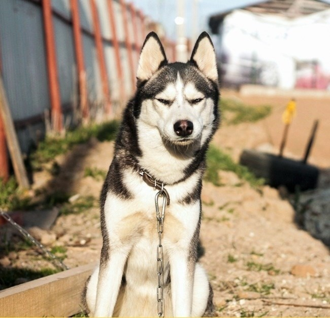 funny animal facial expressions - Dog