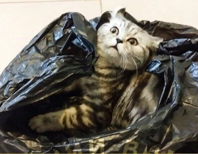 funny animal facial expressions - Cat