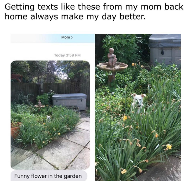 Grass - Getting texts like these from my mom back home always make my day better. Mom Today 3:59 PM Funny flower in the garden