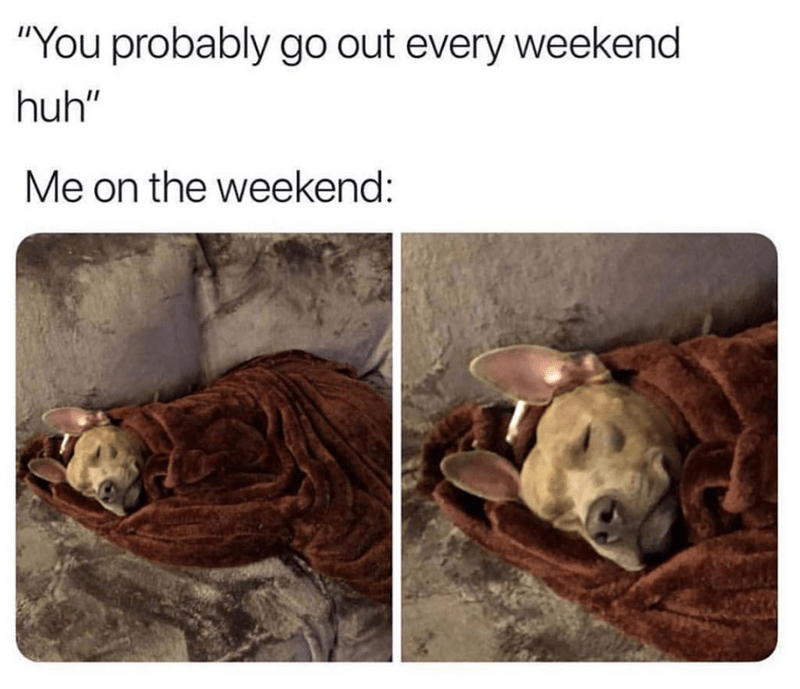"Adaptation - ""You probably go out every weekend huh"" Me on the weekend:"