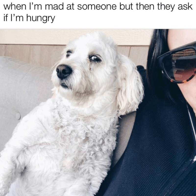 Dog - when l'm mad at someone but then they ask if I'm hungry