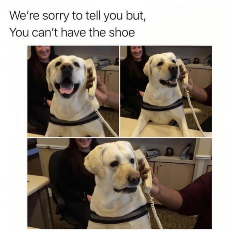 Dog - We're sorry to tell you but, You can't have the shoe