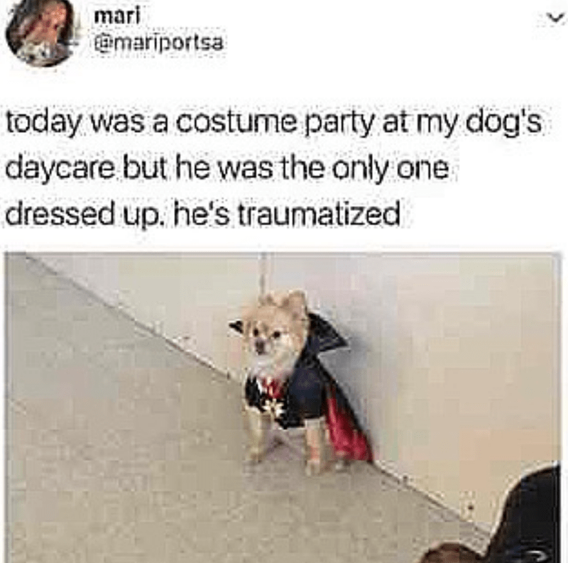 Canidae - mari @mariportsa today was a costume party at my dog's daycare but he was the only one dressed up. he's traumatized