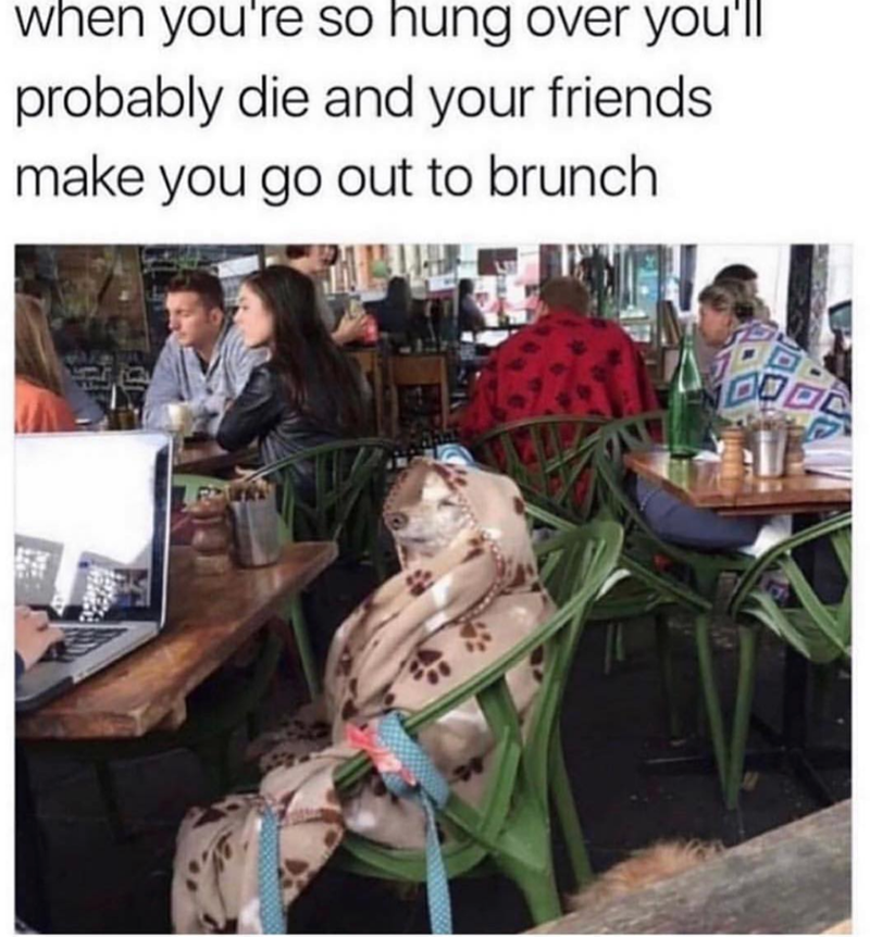 Community - when you're so hung over you'll probably die and your friends make you go out to brunch