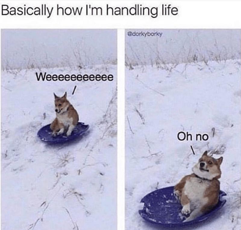 Canidae - Basically how I'm handling life edorkyborky Weeeeeeeeeee Oh no