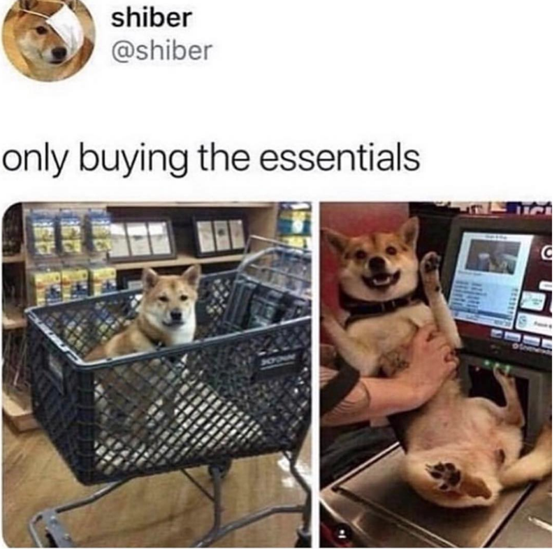 Canidae - shiber @shiber only buying the essentials