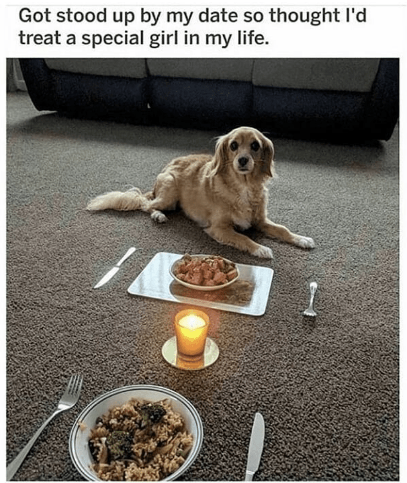 Dog - Got stood up by my date so thought I'd treat a special girl in my life.