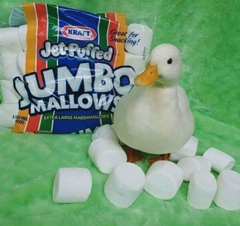 Marshmallow - Great for Smacking! KRAFT Jet Puffed UMBO MALLOWS EXTRALARGE MARSHMALLOWS A FAT-FREE FOOD