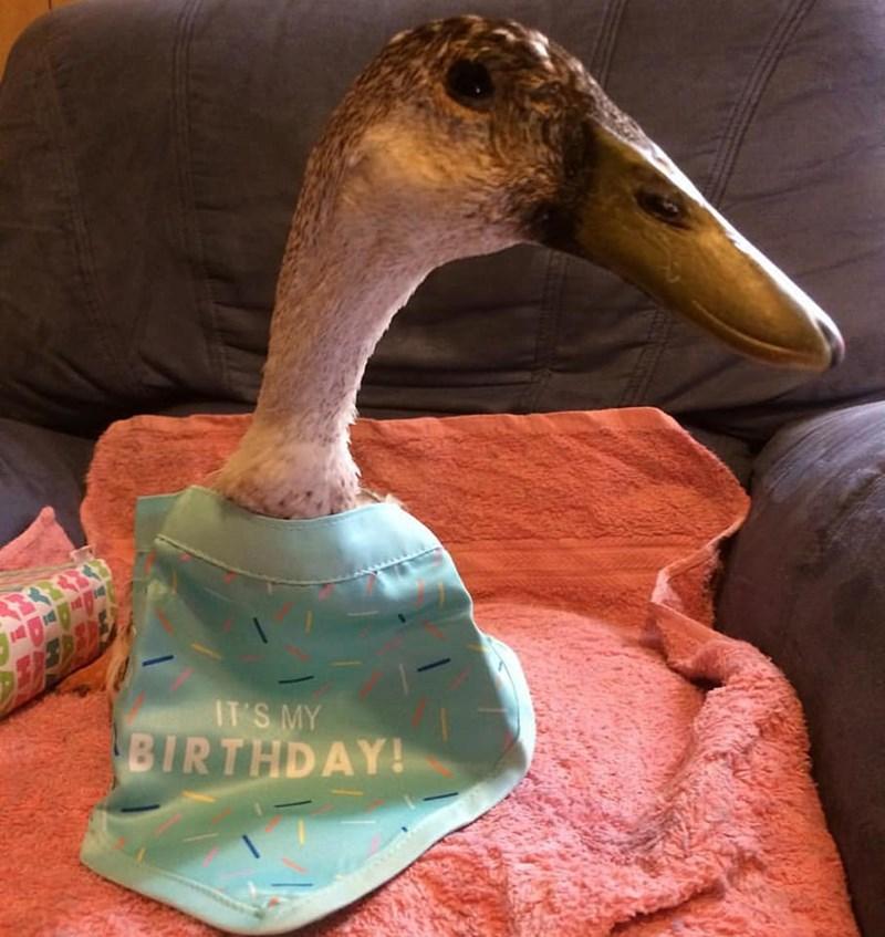 Beak - IT'S MY BIRTHDAY!