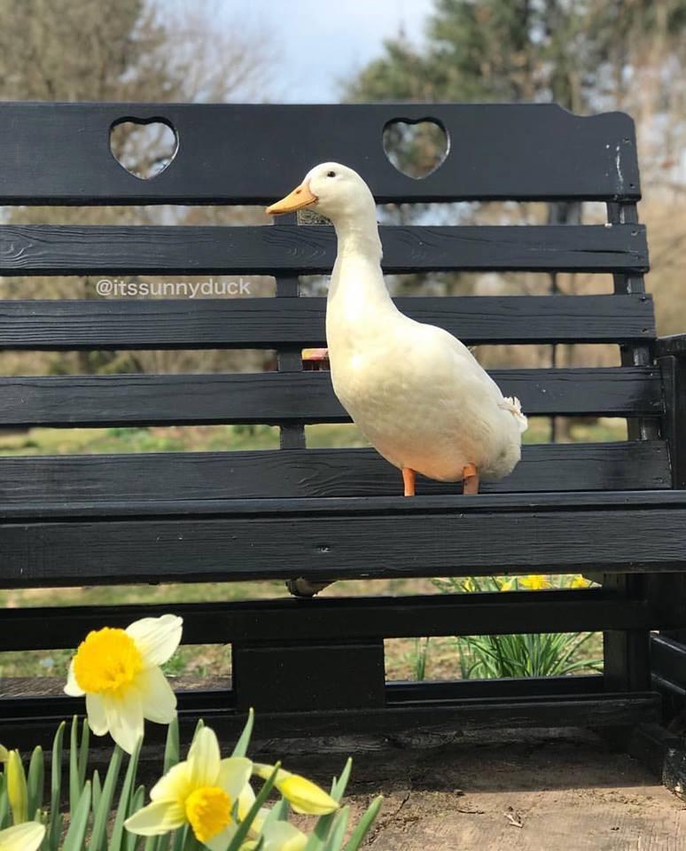 Bird - @itssunnyduck