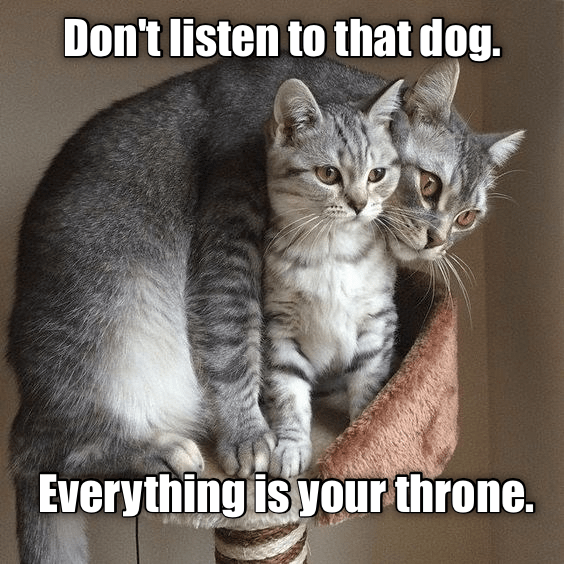Cat - Don't listen to that dog. Everything is your throne.