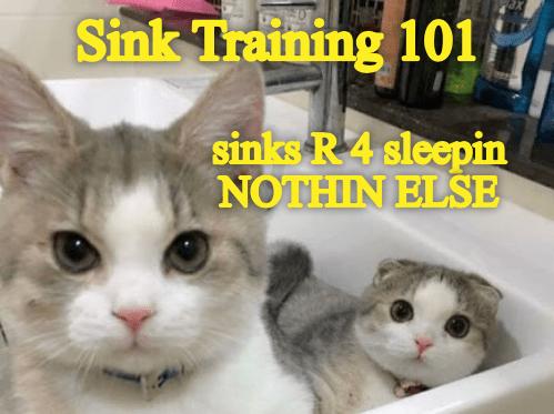 Cat - 20 Sink Training 101 sinks R 4 sleepin NOTHIN ELSE