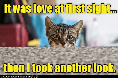 Cat - It was love at first sigh.. then I took another look ICANHASCHEE2EURGER cOM