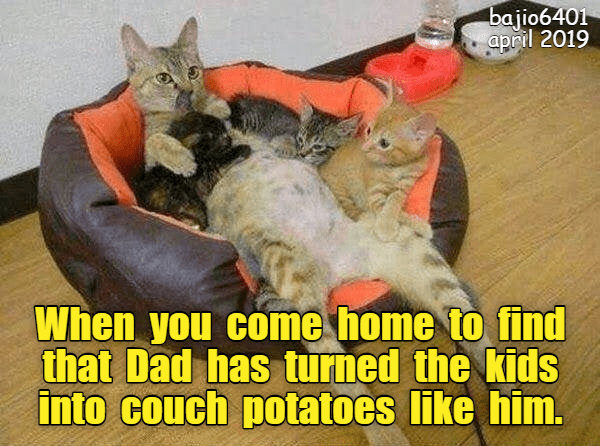 Cat - bajio6401 april 2019 When you come home to find that Dad has turned the kids into couch potatoes like him.