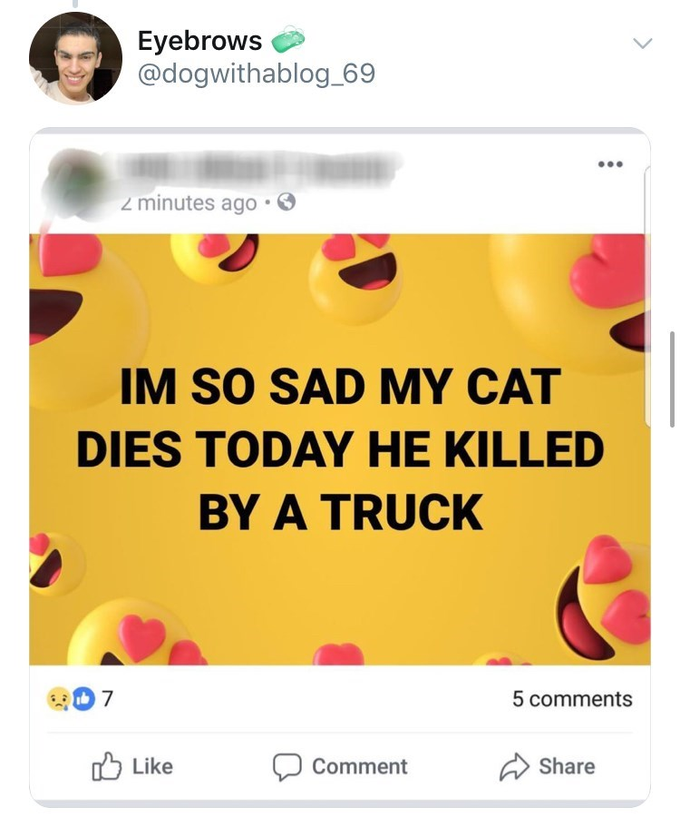 old people facebook - Text - Eyebrows @dogwithablog_69 2 minutes ago IM SO SAD MY CAT DIES TODAY HE KILLED BY A TRUCK 7 5 comments Like Share Comment