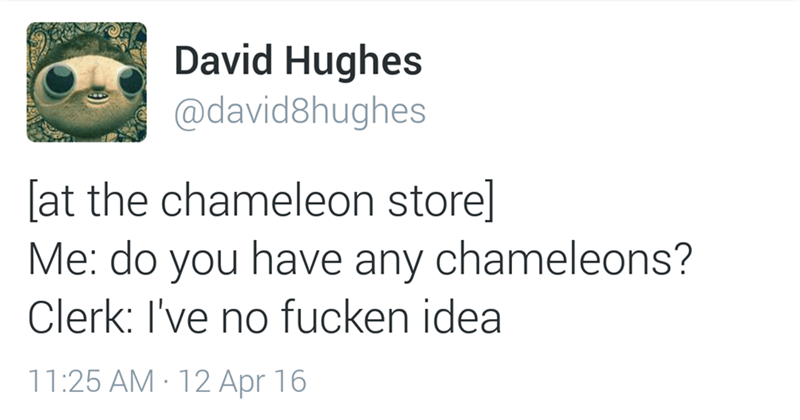 Text - David Hughes @david8hughes [at the chameleon store] Me: do you have any chameleons? Clerk: I've no fucken idea 11:25 AM 12 Apr 16