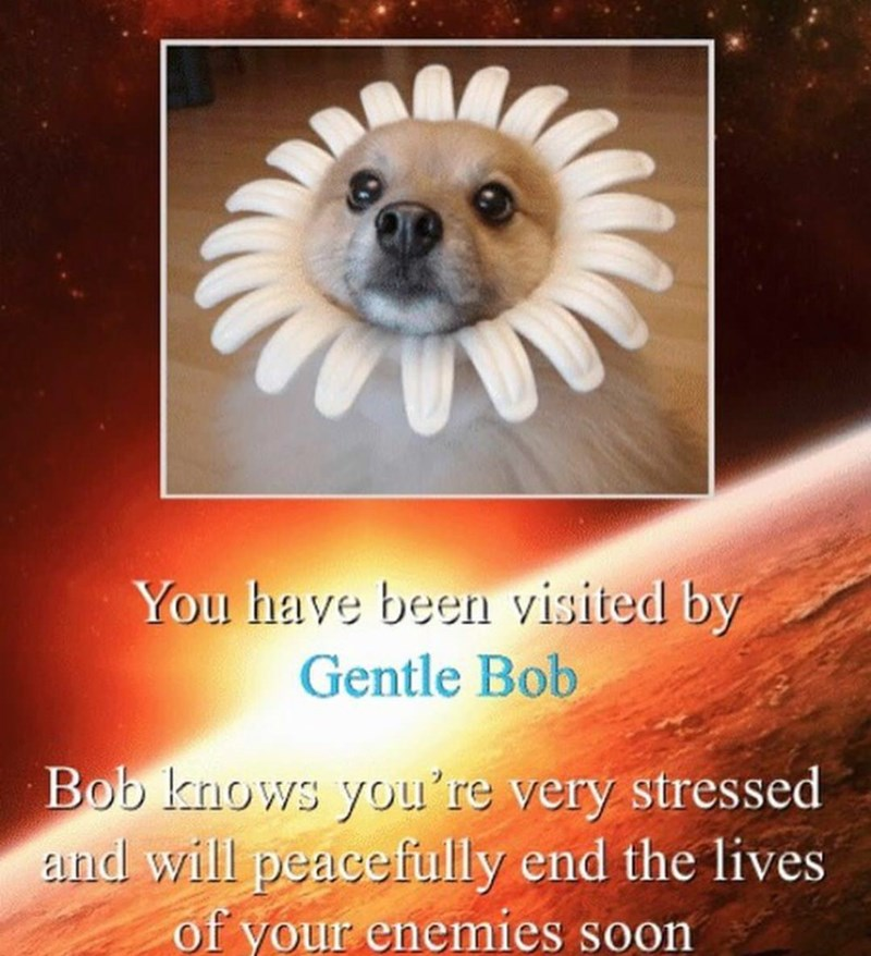 Text - You have beern visited by Gentle Bob Bob knows you're very stressed zand will peacefully end the lives of your enemies soon