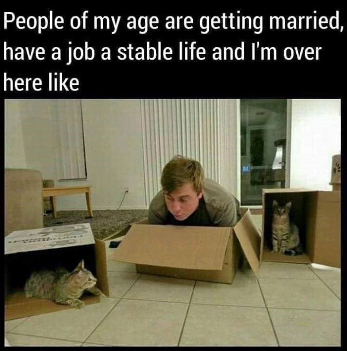 boxes cat meme cat people Cats - 9297325824