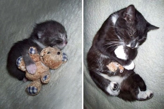 Cute cats - kitten holding toy and still holds it years later