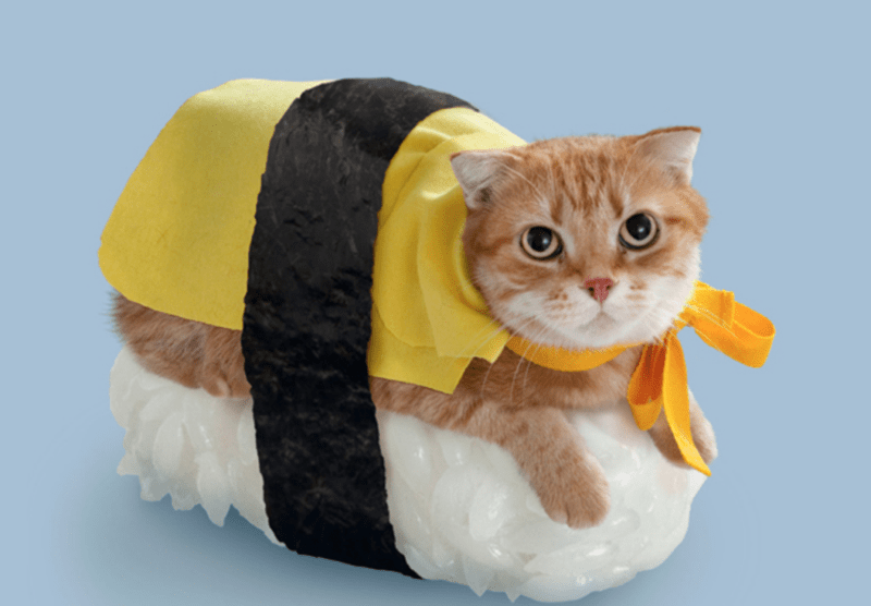 Cute cats - cat dressed up as a sushi roll with tamago
