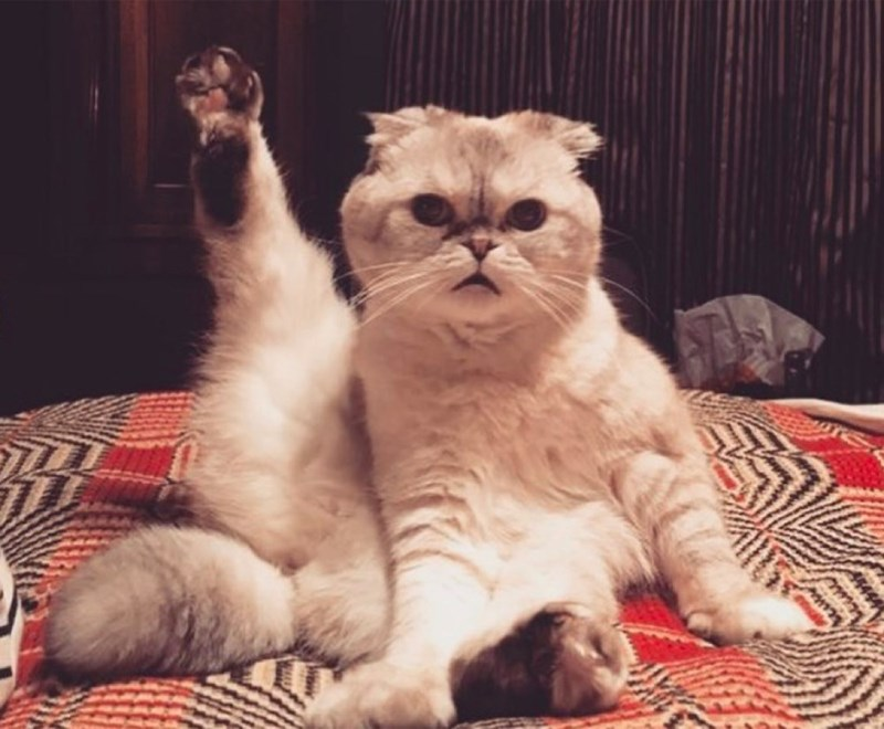 Cute cats - Taylor Swift Has Famous Cats