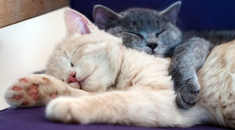 Cute cats - cats cuddling together