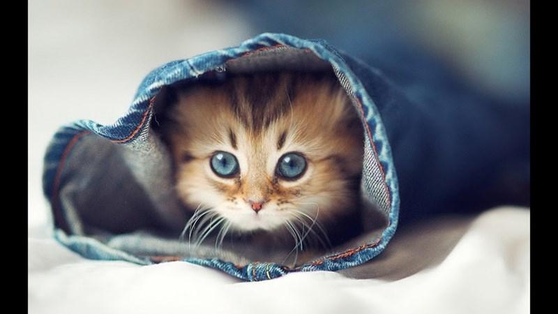 Cute cats - kitten inside jeans pant leg