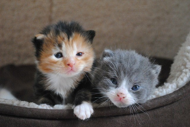 Cute cats - two sleepy kittens in their bed