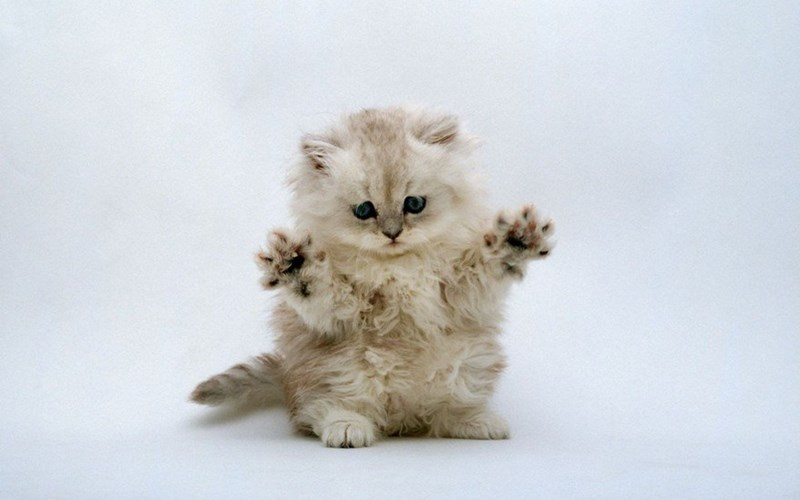 Cute cats - kitten with his hands in the air