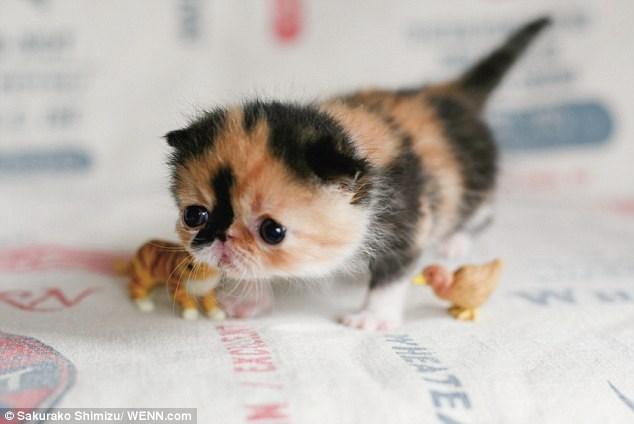 Cute cats - tiny kitten looks forlorn