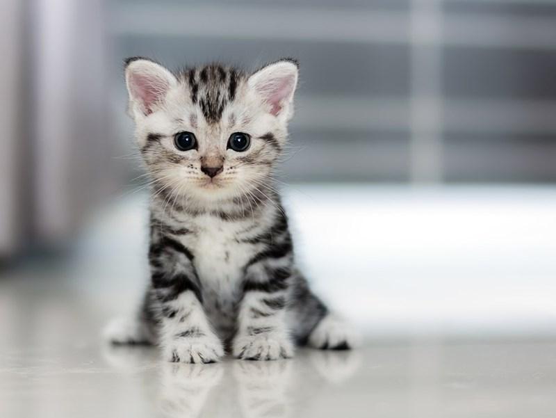 Cute cats - kitten sits in hallway