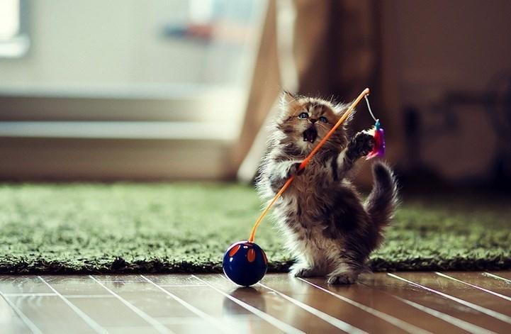 Cute cats - kitten holding a toy golf flag