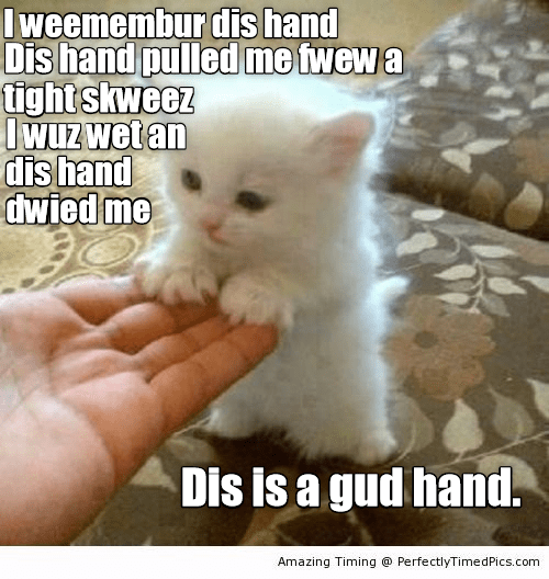 cat meme - Cat - Iweemembur dis hand Dis hand pulled me fwew a tightskweez Iwuz wet an dis hand dwied me Dis is a gud hand. Amazing Timing @ PerfectlyTimedPics.com