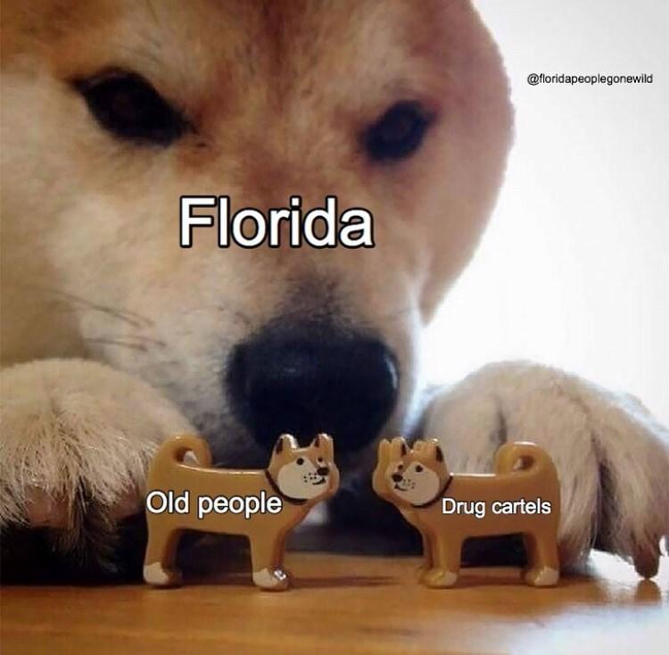 Mammal - @floridapeoplegonewild Florida Old people Drug cartels