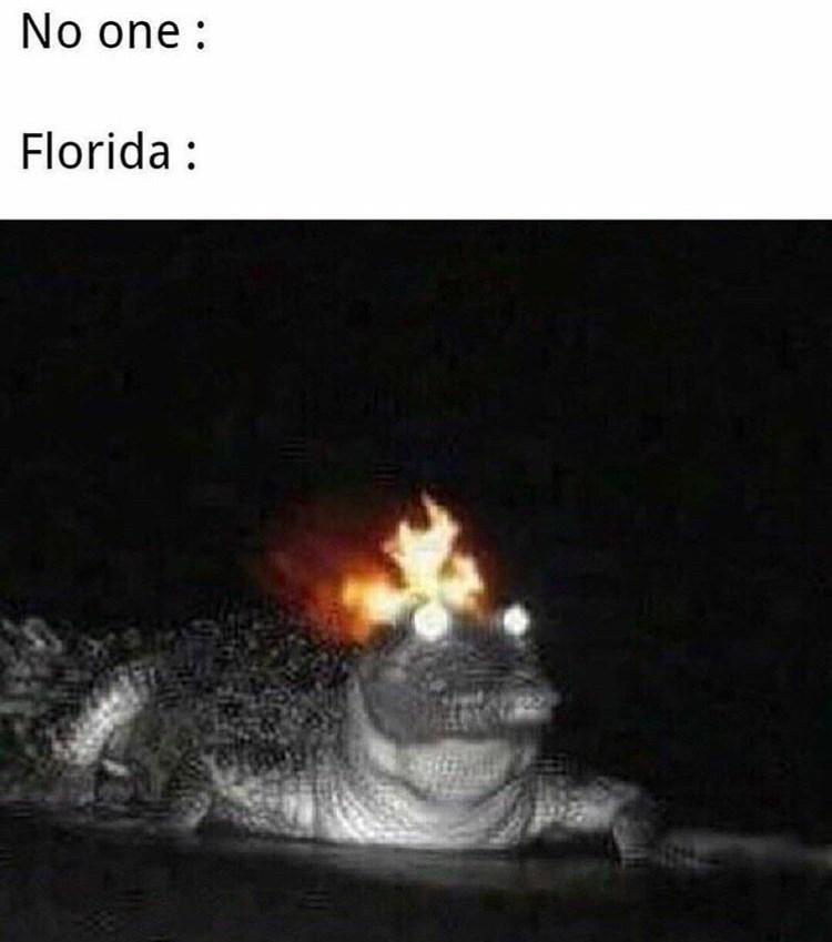 Reptile - No one Florida