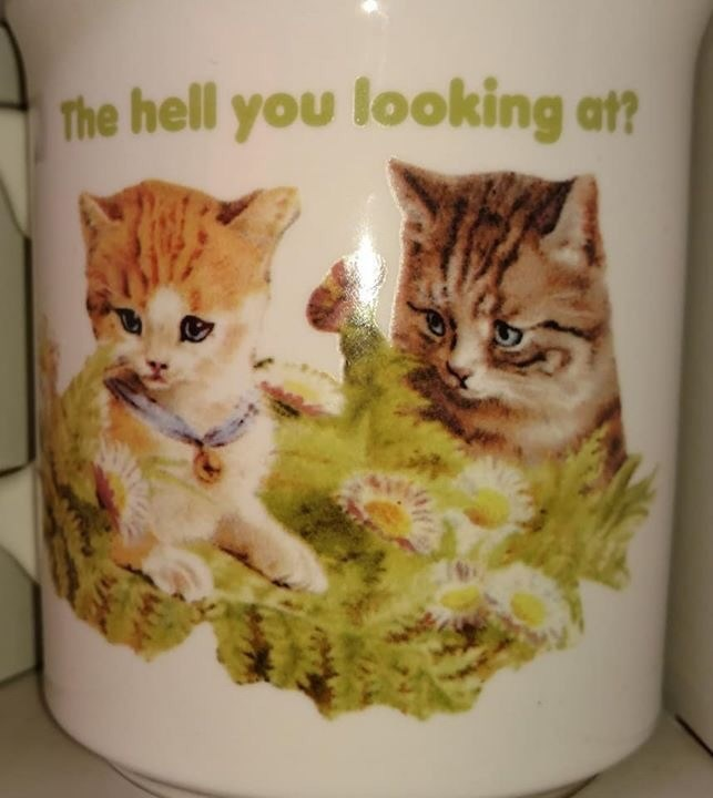 Cat - The hell you looking at?