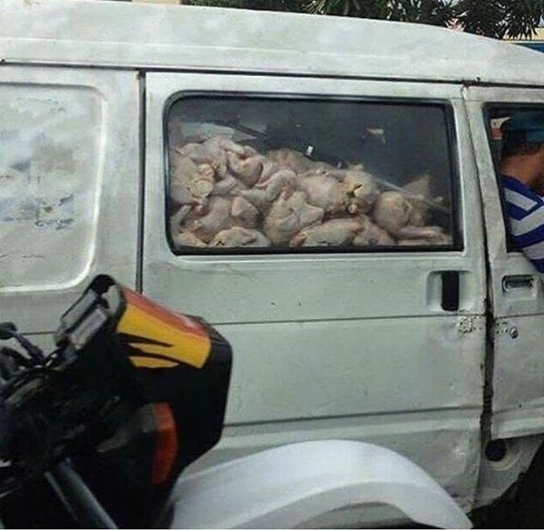 cursed_image - Motor vehicle filled with chickens