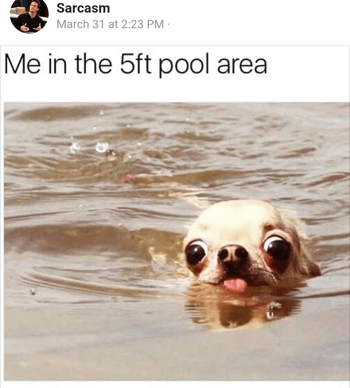 random meme of a dog swimming in a pool and when someone short goes swimming
