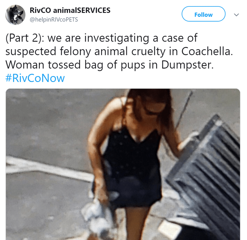 Text - RivCO animalSERVICES Follow @helpinRIVcoPETS (Part 2): we are investigating a case of suspected felony animal cruelty in Coachella. Woman tossed bag of pups in Dumpster. #RivCoNow