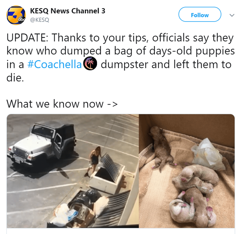 Vehicle - KESQ News Channel 3 ab@KESQ Follow UPDATE: Thanks to your tips, officials say they know who dumped a bag of days-old puppies in a #Coachelladumpster and left them to die. What we know now -
