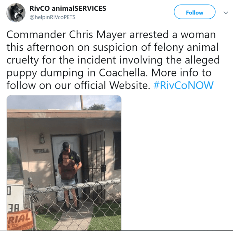Text - RivCO animalSERVICES @helpinRIVcoPETS Follow Commander Chris Mayer arrested a woman this afternoon on suspicion of felony animal cruelty for the incident involving the alleged puppy dumping in Coachella. More info to follow on our official Website. #RivCoNOW 91576 RIAL E CO