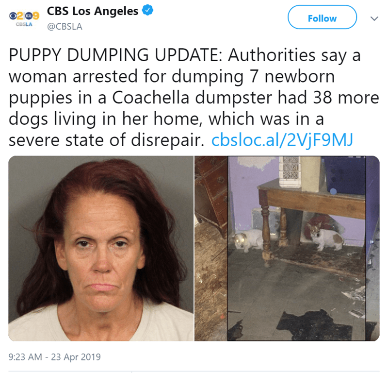 Text - CBS Los Angeles O2 Follow CBSLA @CBSLA PUPPY DUMPING UPDATE: Authorities say a woman arrested for dumping 7 newborn puppies in a Coachella dumpster had 38 more dogs living in her home, which was in a severe state of disrepair. cbsloc.al/2VJF9MJ 9:23 AM -23 Apr 2019