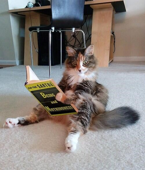 Cute cats - cat reading a book sitting like a human