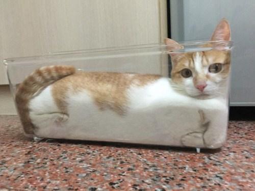 Cute cats - cat stuck in a glass dish