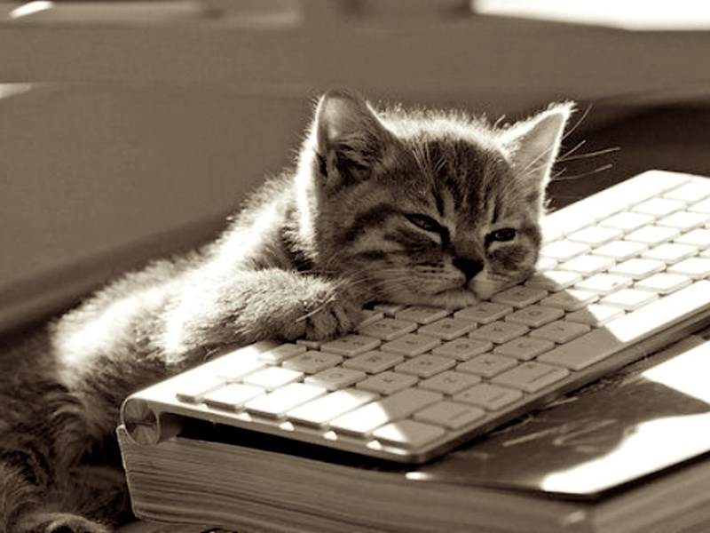 Cute cats - tired cat lying on keyboard