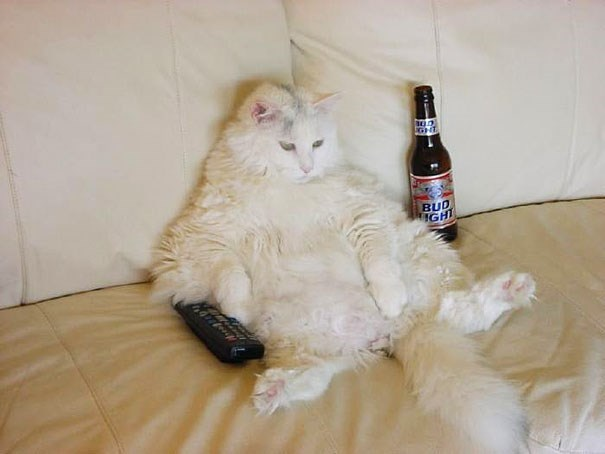 Cute cats - Cat sitting on couch drinking beer